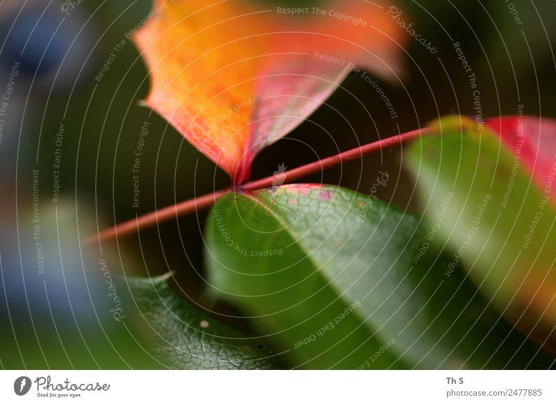 Blatt Natur Sommer blau Pflanze grün rot ruhig Herbst Frühling natürlich Bewegung elegant frisch ästhetisch authentisch
