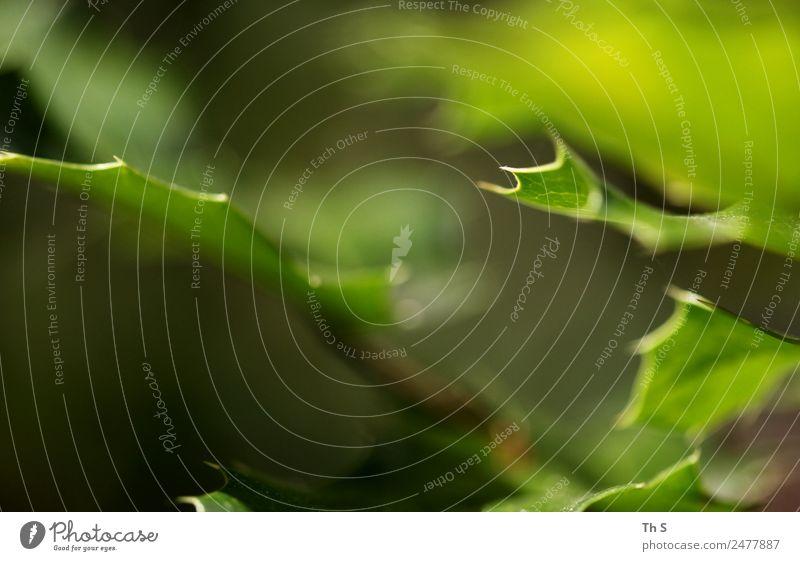 Blatt Natur Sommer Pflanze grün ruhig Frühling natürlich Bewegung elegant frisch ästhetisch authentisch Blühend einzigartig einfach