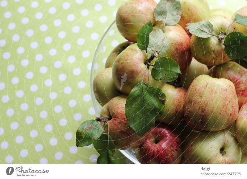 frisch geerntete Äpfel mit Blättern in einer Glasschale vor grünem Hintergrund mit weißen Punkten Lebensmittel Frucht Apfel Ernährung Bioprodukte