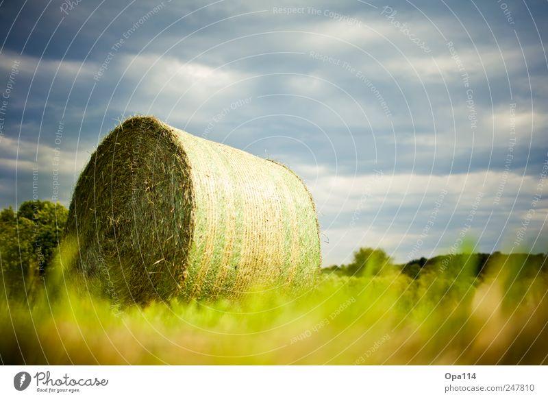 Eingewickelt Umwelt Natur Landschaft Pflanze Tier Wolken Sonnenlicht Sommer Klima Wetter Schönes Wetter Gras Sträucher Grünpflanze Nutzpflanze Wiese Feld liegen