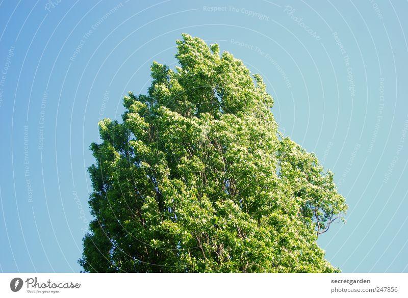 in japan gibt es nur ein wort für grün und blau. Natur Baum Sommer ruhig Erholung Umwelt Frühling Wind einfach Schönes Wetter Baumkrone Rauschen Mittelpunkt