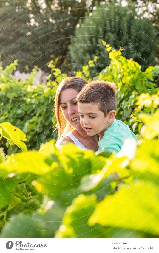 Schöne Mutter verbringt Zeit mit ihrem Sohn auf dem Gebiet der Trauben. Lifestyle Freude Glück schön Ferien & Urlaub & Reisen Sommer Kind Mensch Kleinkind Junge
