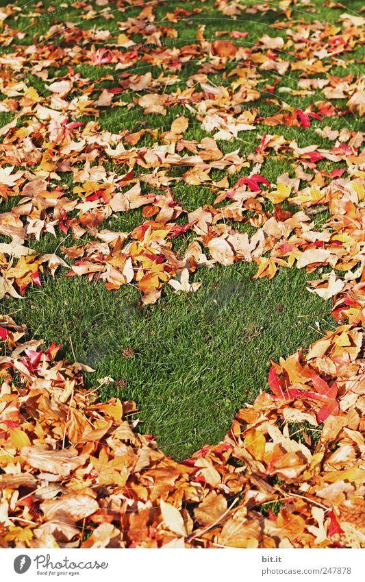 Herbstliebe Natur Ferien & Urlaub & Reisen grün Erholung ruhig Blatt Umwelt Wiese Glück Feste & Feiern Freundschaft Dekoration & Verzierung Klima Geburtstag