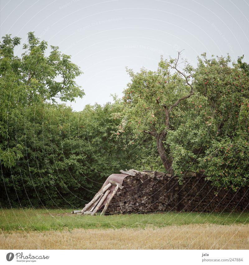 holz Himmel Natur grün Baum blau Pflanze Wiese Landschaft Umwelt Gras Holz braun natürlich Sträucher Grünpflanze Brennholz