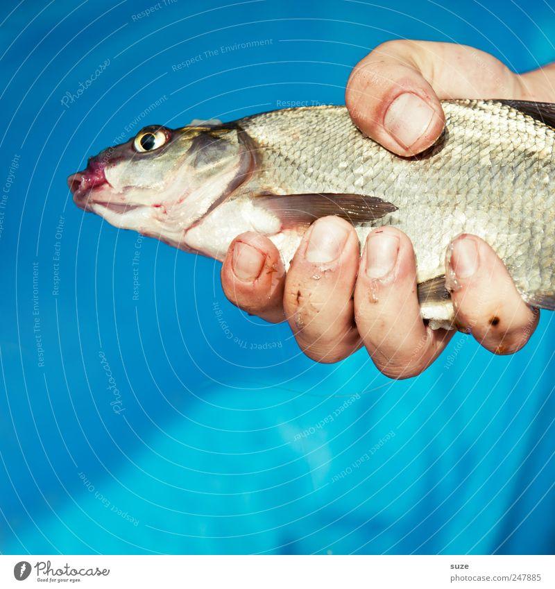Freitag gibs Fisch Hand blau Tier Freizeit & Hobby Finger festhalten Angeln Fischereiwirtschaft Beute