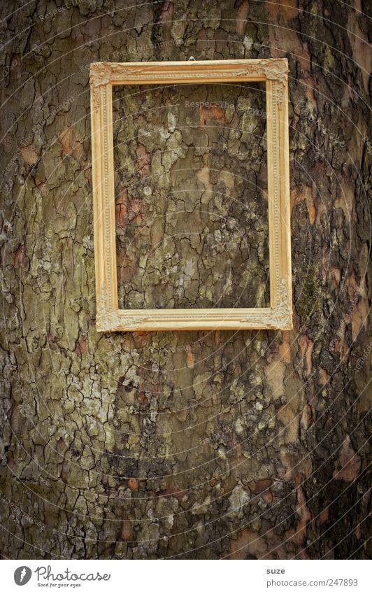 Bildbild Baum hängen gold Bilderrahmen Baumstamm Königlich edel Rahmen leer Baumrinde vergessen Farbfoto Gedeckte Farben Außenaufnahme Nahaufnahme