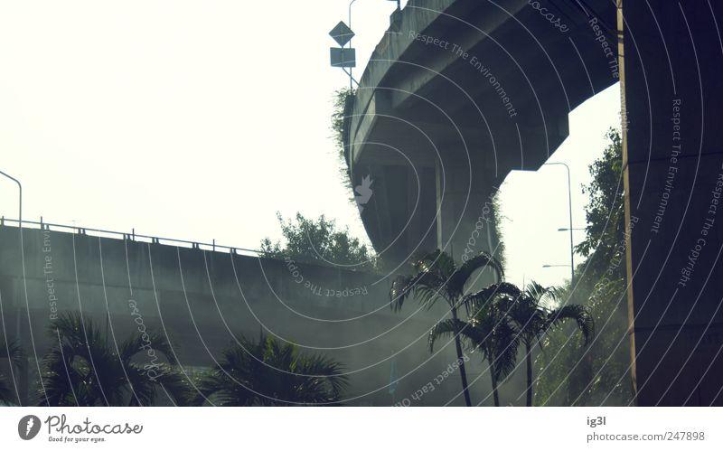 Jurassic Park Baum Pflanze Stein Stimmung Angst Nebel Schilder & Markierungen Tourismus Brücke gefährlich Asien Verbindung Hauptstadt Risiko Desaster Thailand
