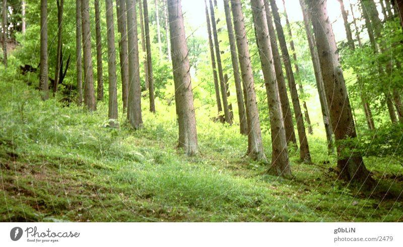 unterholz Natur Baum Sonne grün Pflanze Holz Erde