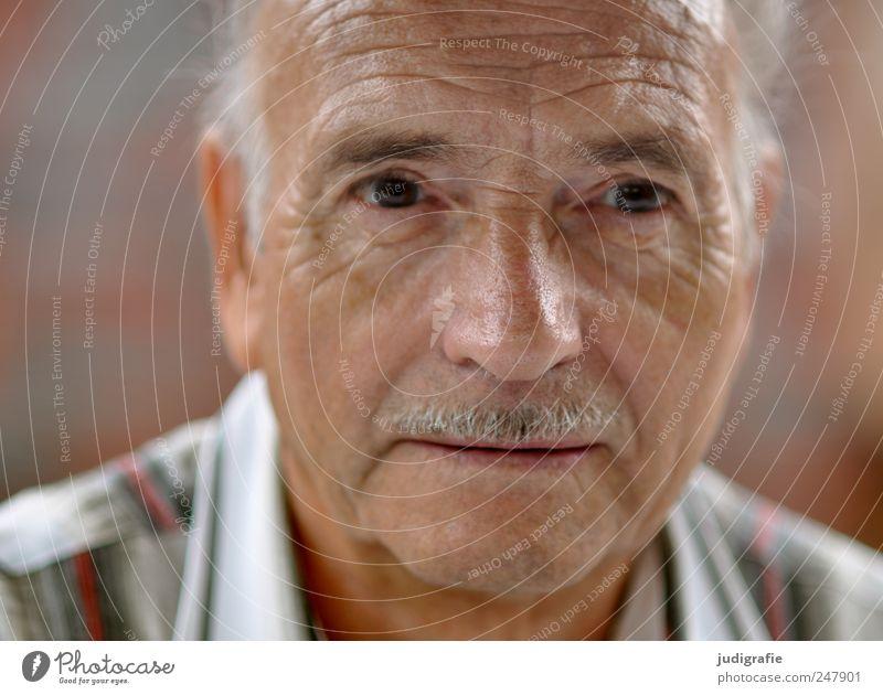 Siebenundsiebzig Mensch Mann Senior Gesicht Erwachsene warten maskulin Bart 60 und älter Sympathie Männlicher Senior Oberlippenbart