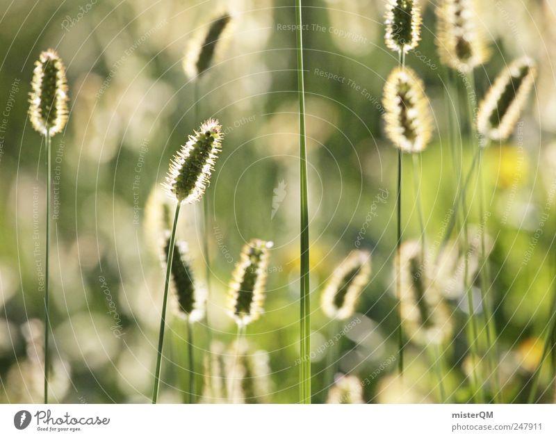 graminicolous. Natur grün Pflanze Sommer ruhig Wiese Umwelt Landschaft Gras Wärme Wetter ästhetisch Hoffnung Jahreszeiten Glaube wehen