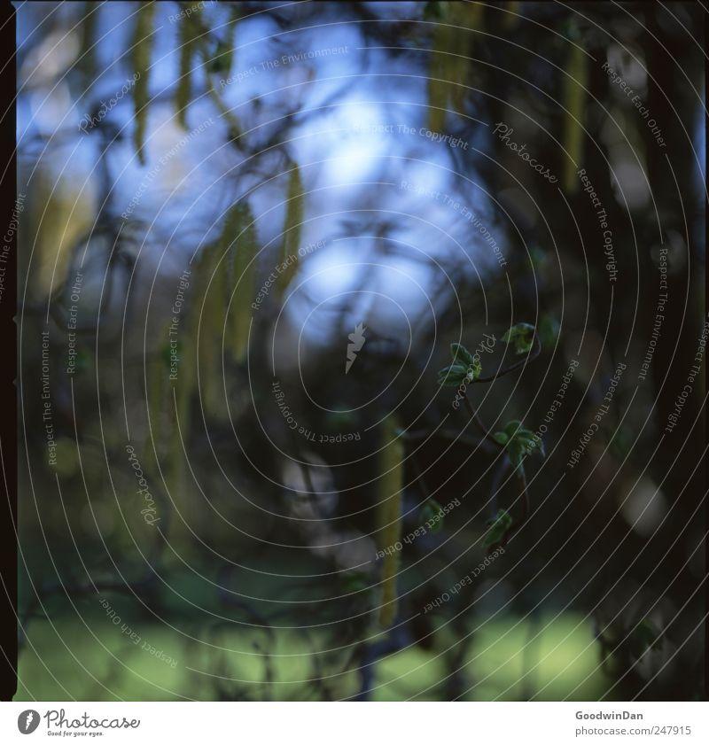 Macro. Umwelt Natur Pflanze Sträucher Park authentisch einfach frei kalt nah Stimmung Farbfoto Außenaufnahme Nahaufnahme Detailaufnahme Menschenleer Morgen