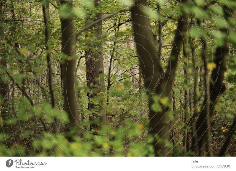 wald Umwelt Natur Pflanze Baum Sträucher Grünpflanze Wildpflanze Wald natürlich wild braun grün Farbfoto Außenaufnahme Menschenleer Tag