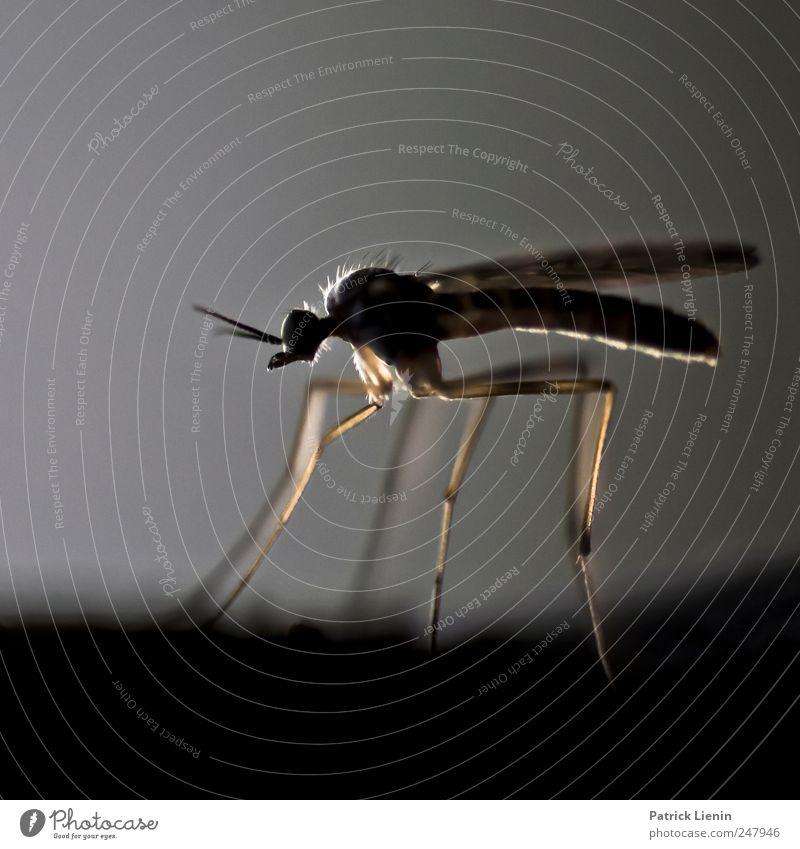 Bite me! Natur Sommer Tier Umwelt Bewegung sitzen ästhetisch natürlich einzigartig Flügel Wildtier Insekt Spitze beobachten Kontakt Schmerz