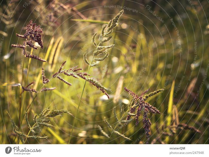 Harmonie. Natur grün Pflanze ruhig Wiese Umwelt Landschaft Gras ästhetisch Hoffnung Idylle Waldlichtung Wiesenblume grün-gelb