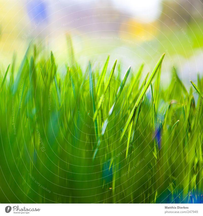 Gras Umwelt ästhetisch Wiese Natur ökologisch schön grün Grünpflanze Unschärfe Schwache Tiefenschärfe Stengel Blumenkasten Farbfoto Außenaufnahme Nahaufnahme