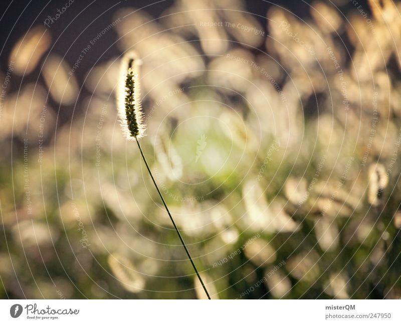 outstanding. Natur grün Pflanze ruhig Wiese Umwelt Landschaft Wind ästhetisch Hoffnung außergewöhnlich leuchten Glaube Waldlichtung herausstechend markant