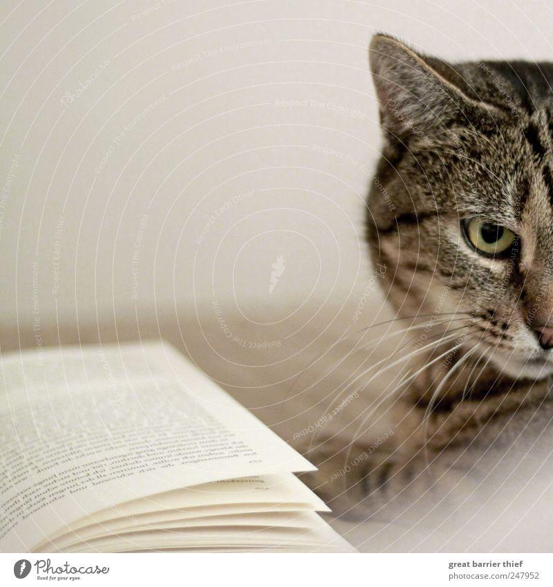 Katze Buch Tier Behaarung Haustier Tiergesicht 1 Blick außergewöhnlich Neugier Tierliebe Fell Katzenauge Farbfoto Innenaufnahme Nahaufnahme Menschenleer Tag