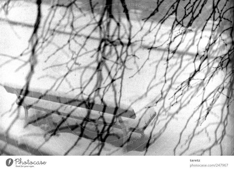 Winter kommt bestimmt Schnee warten kalt Einsamkeit Parkbank unklar Ast kahl trist leer Schwarzweißfoto Außenaufnahme Menschenleer Tag
