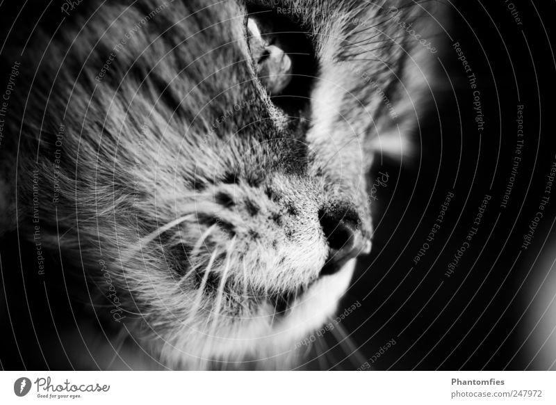 Grisu Natur Tier Katze Tiergesicht Haustier