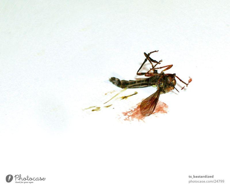 tote mücke... selber schuld Tod Verkehr neu Ende Stechmücke Schleim