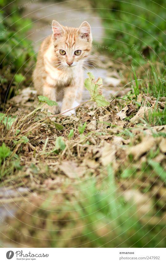 Entdecker Natur Katze Sommer Freude Tier gelb Wiese Leben Umwelt Landschaft Gefühle Bewegung Gras klein Tierjunges Feld