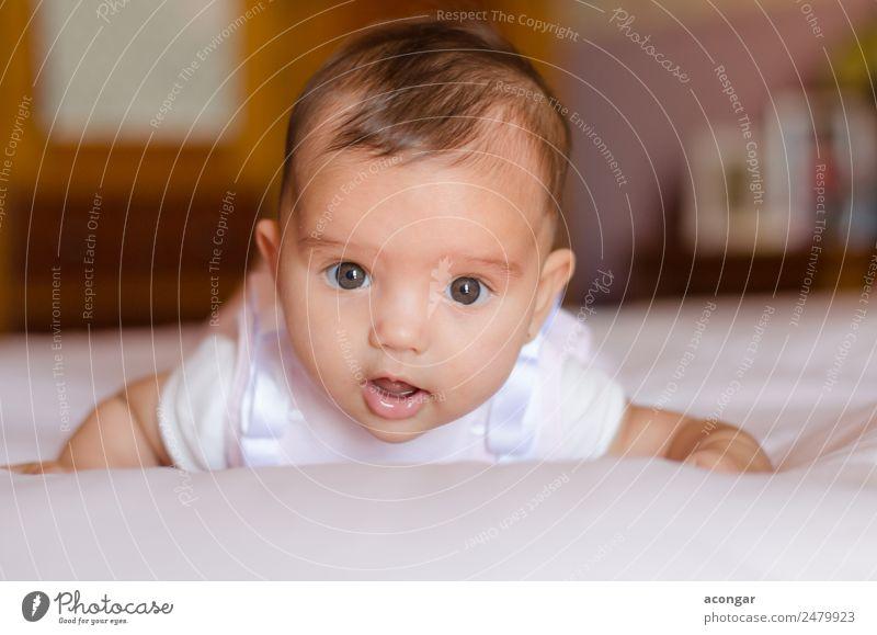 Porträt eines drei Monate alten Babys schön Mensch feminin Mädchen Kindheit Gesicht 1 0-12 Monate Geborgenheit Sympathie süß niedlich lügen Farbfoto