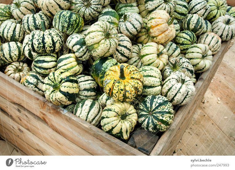 Ernte-Zeit grün Ernährung Herbst Holz Lebensmittel braun rund viele Gemüse Kasten lecker verkaufen Angebot Kürbis Vegetarische Ernährung Kürbiszeit