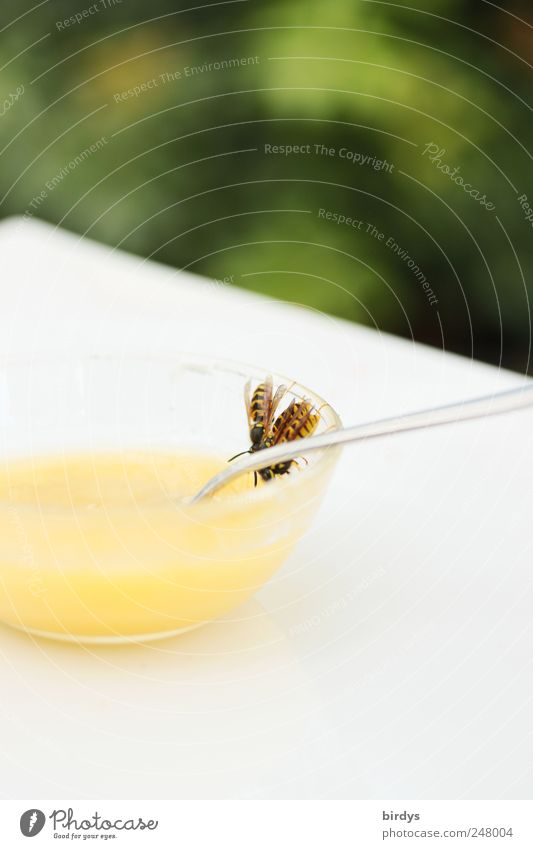 Zu Tisch Brüder und Schwestern weiß grün Tier gelb Ernährung süß gefährlich bedrohlich Insekt Süßwaren Fressen Schalen & Schüsseln Honig Löffel Wespen Plage