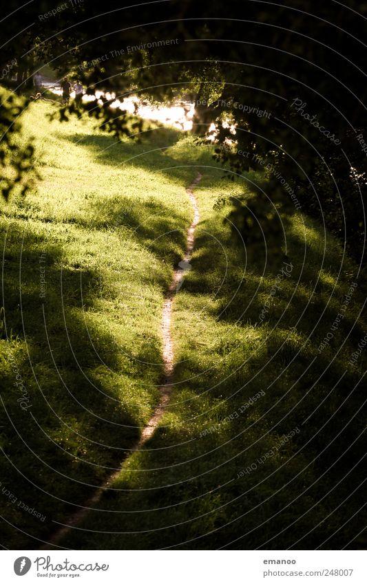 sunset path Natur Wasser grün Baum Pflanze Sommer Ferien & Urlaub & Reisen Ferne Wald Wiese Umwelt Freiheit Landschaft Gras klein Park