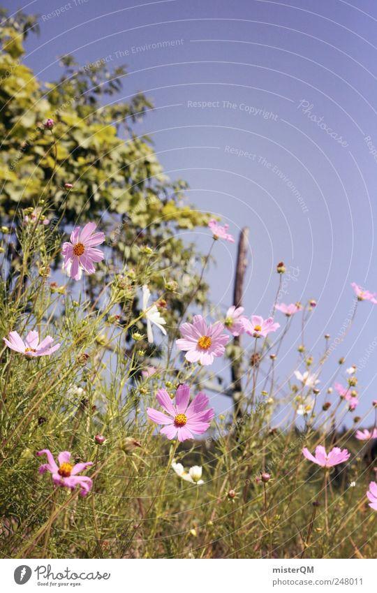 Wegrand. Umwelt Natur Landschaft Pflanze ästhetisch Blume Wiesenblume Blumenwiese Blüte Italien Sommer Außenaufnahme natürlich rosa violett grün Vorgarten Hügel