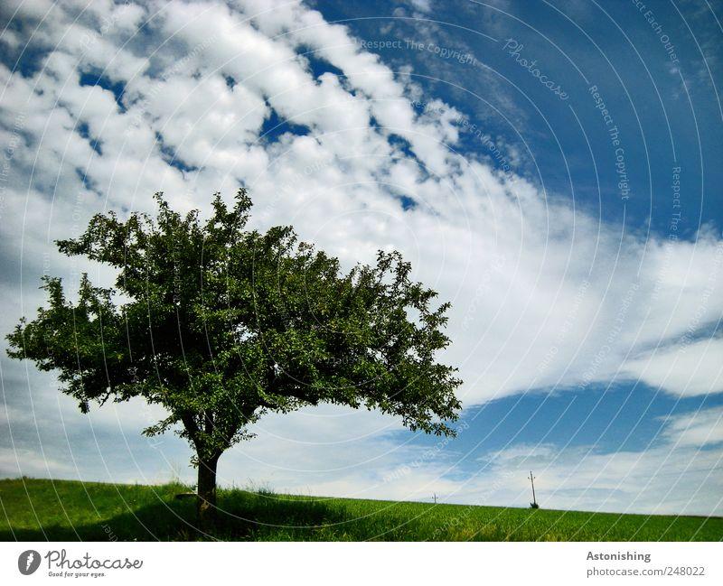 der einsame Baum Umwelt Natur Landschaft Pflanze Luft Himmel Wolken Horizont Sommer Wetter Schönes Wetter Gras Wiese alt schön Ast Hochspannungsleitung
