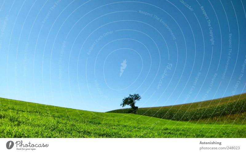 zwischen feld und wiese Umwelt Natur Landschaft Pflanze Erde Luft Himmel Wolkenloser Himmel Sommer Wetter Schönes Wetter Baum Gras Sträucher Grünpflanze