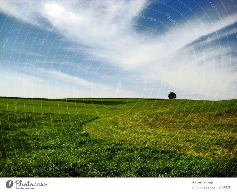 alleine Himmel Natur blau weiß grün Pflanze Sommer Wolken Einsamkeit Wiese Umwelt Landschaft Gras Luft Wetter Horizont