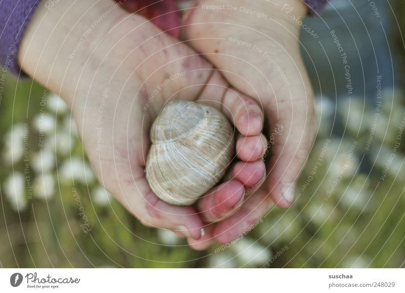 in my hands ... Kind Kindheit Muschel Finger Mensch 3-8 Jahre tragen festhalten Hand Wiese Blume Schnecke Schneckenhaus bewohnt Natur Farbfoto Kinderhand