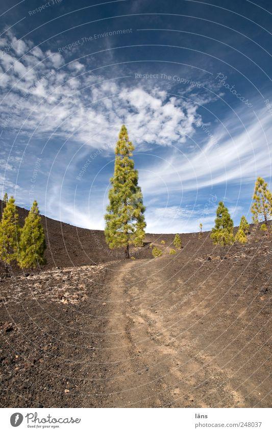 angepasst Himmel Baum Wolken Landschaft Umwelt Wege & Pfade Stein Urelemente außergewöhnlich Vulkankrater