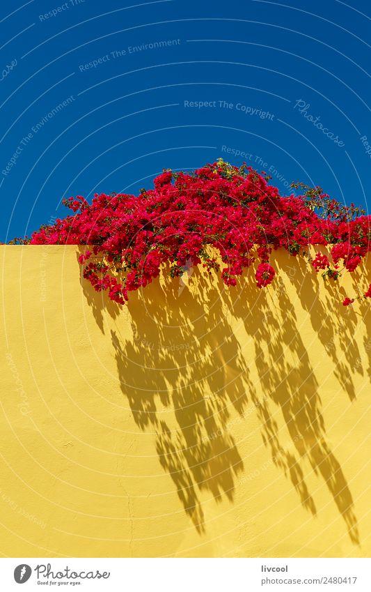rote Blumen an gelber Wand, portugalisch Haus Dekoration & Verzierung Kunst Natur Pflanze Himmel Frühling Klima Garten Gebäude Straße niedlich blau gelbe Wand