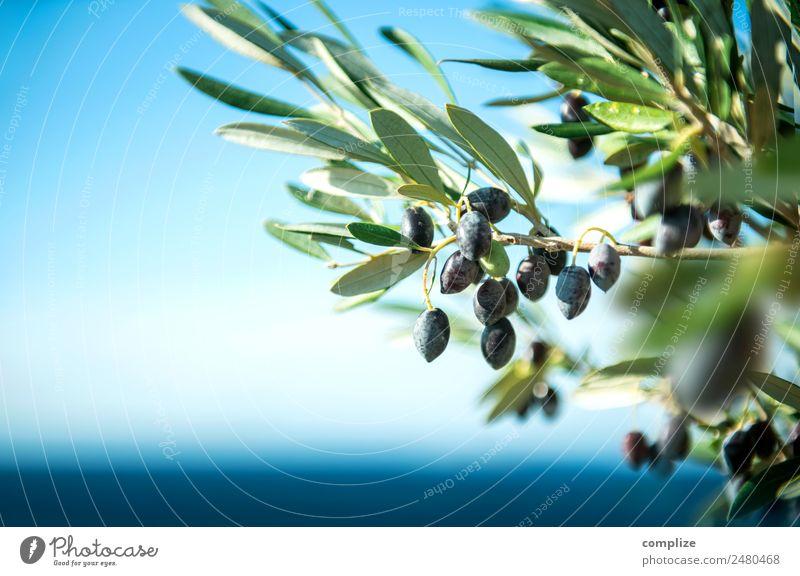 Olivenzweig am Meer in Griechenland Lebensmittel Frucht Öl Ernährung Bioprodukte Italienische Küche Stil schön Gesundheit Gesunde Ernährung