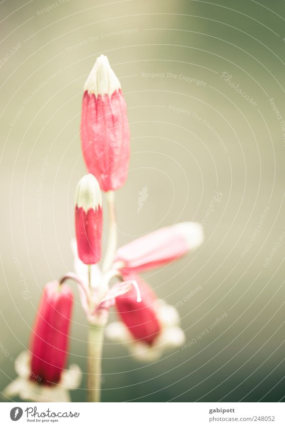 Für dich Natur Pflanze Blume Blatt Blüte Wildpflanze außergewöhnlich positiv schön rosa rot Lebensfreude ästhetisch einzigartig exotisch Farbe retro