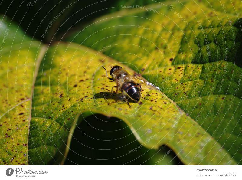 Spätsommer Natur grün Pflanze Sommer Blatt Tier gelb klein natürlich Schönes Wetter Aggression Grünpflanze