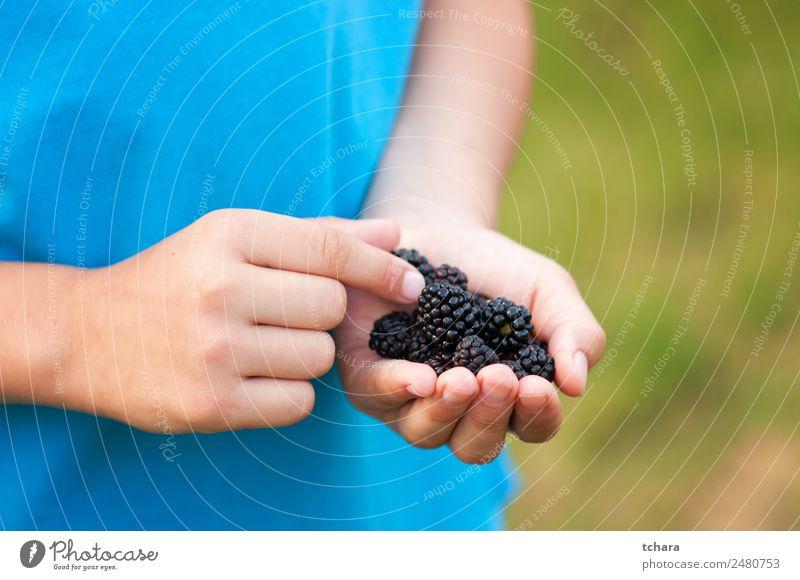 Reife Brombeeren in der Kinderhand Lebensmittel Frucht Dessert Essen Frühstück Vegetarische Ernährung Diät Hand Natur frisch lecker natürlich saftig grün