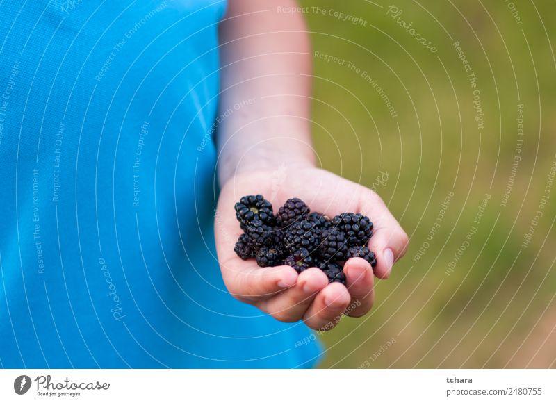 Reife Brombeeren in der Hand Lebensmittel Frucht Dessert Essen Frühstück Vegetarische Ernährung Diät Natur frisch lecker natürlich saftig grün schwarz Farbe