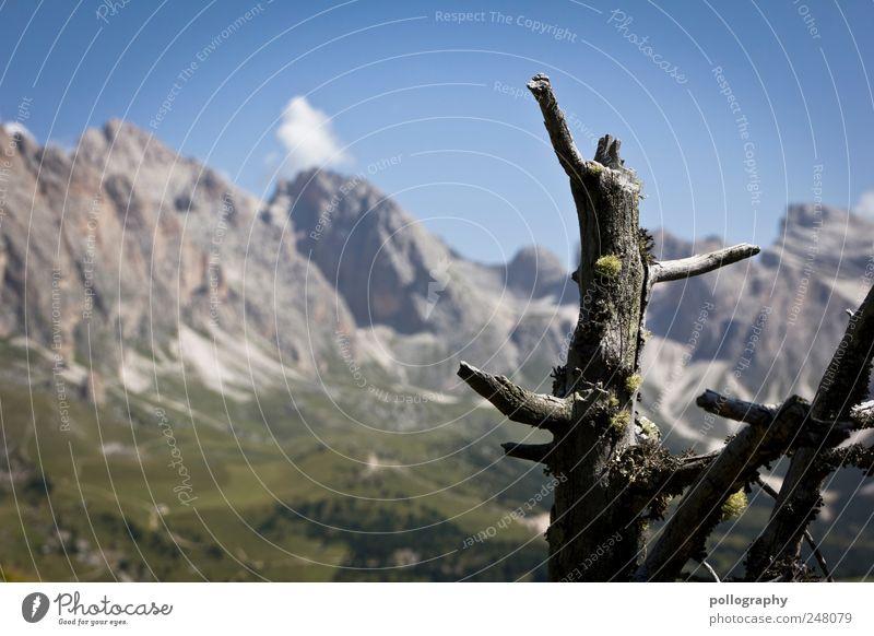 Baumgrenze Himmel Natur Ferien & Urlaub & Reisen blau Pflanze grün schön Sommer Landschaft Berge u. Gebirge Wiese natürlich Holz grau Freiheit