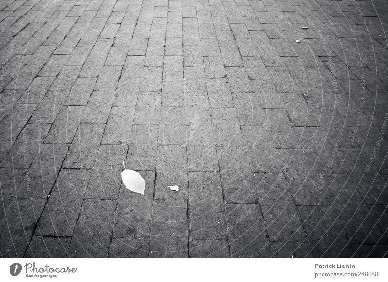 time has told me Umwelt Pflanze Blatt Platz Straße Stein Beton grau Einsamkeit ästhetisch einzigartig Erholung Leichtigkeit nachhaltig ruhig Symmetrie träumen