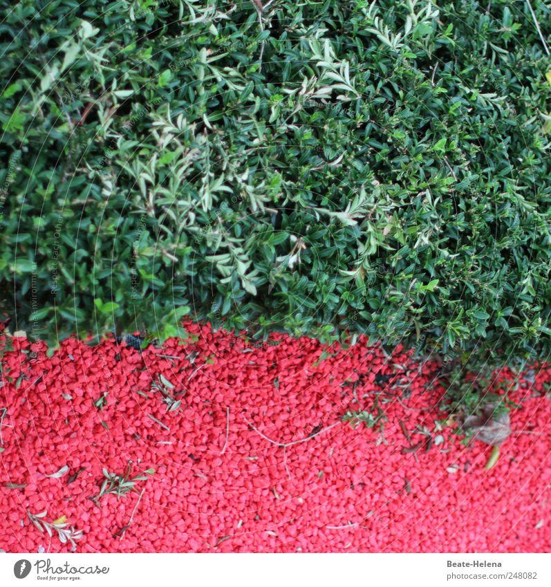 Keine Rot-Grün-Schwäche Natur grün rot Pflanze Sommer Wege & Pfade Stein Park ästhetisch modern außergewöhnlich Kräuter & Gewürze Schönes Wetter Gartenbau