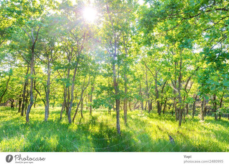 Panoramalandschaft mit grünem Wald schön Sommer Sommerurlaub Sonne Umwelt Natur Landschaft Pflanze Sonnenaufgang Sonnenuntergang Sonnenlicht Frühling