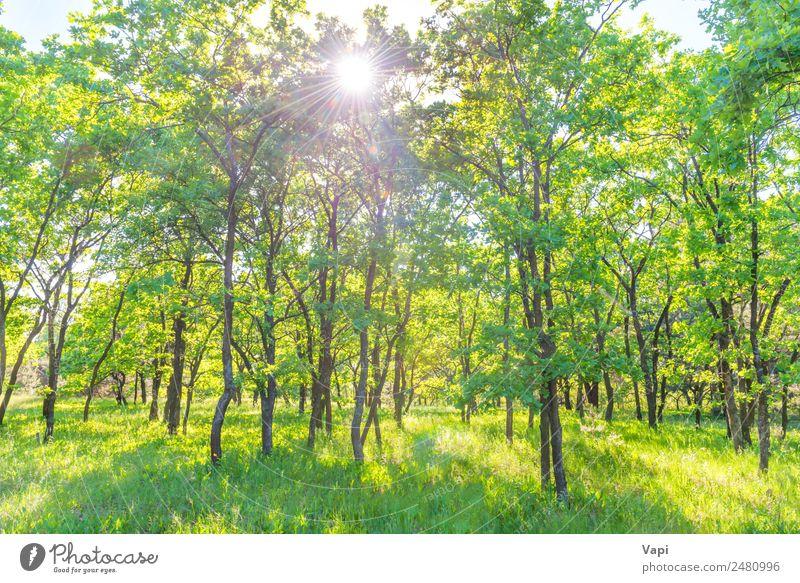 Landschaft mit grünem Wald schön Sommer Sonne Umwelt Natur Pflanze Sonnenaufgang Sonnenuntergang Sonnenlicht Frühling Schönes Wetter Baum Gras Sträucher Blatt