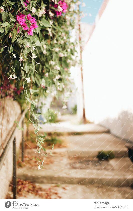 Marseille 7ème II Umwelt Natur Stadtzentrum Haus Mauer Wand Treppe alt mediterran Südfrankreich Blume rosa braun Geländer Unschärfe Gasse eng Altstadt Provence