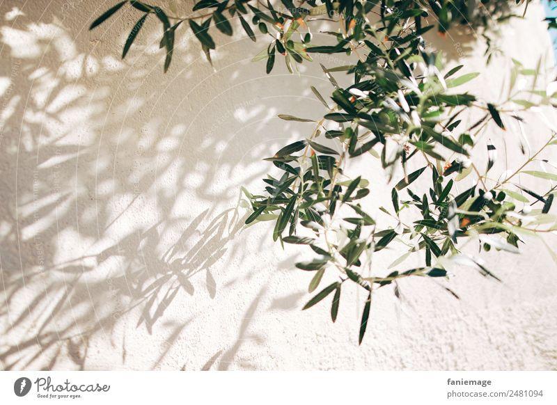 Olivenzweige Umwelt Natur Mauer Wand ästhetisch mediterran Olivenbaum Olivenöl Olivenblatt Schattenspiel Marseille Provence Süden Mittelmeer beige grün