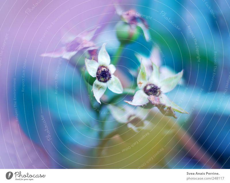 farbspiel. Natur blau Pflanze Blume gelb Umwelt Park Zufriedenheit rosa Sträucher einzigartig außergewöhnlich Lebensfreude Schönes Wetter exotisch