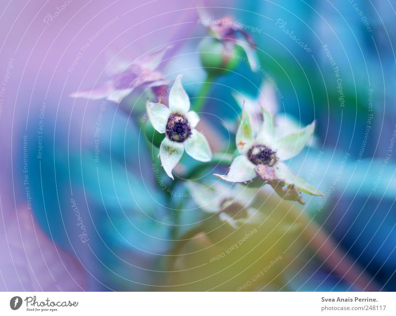 farbspiel. Natur blau Pflanze Blume gelb Umwelt Park Zufriedenheit rosa Sträucher einzigartig außergewöhnlich Lebensfreude Schönes Wetter exotisch Frühlingsgefühle